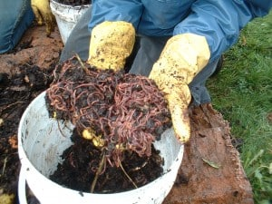 WormCompost