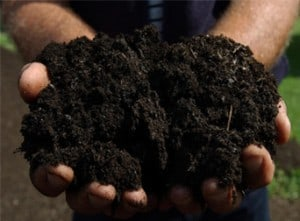 compost hands