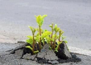 plantsthruconcrete