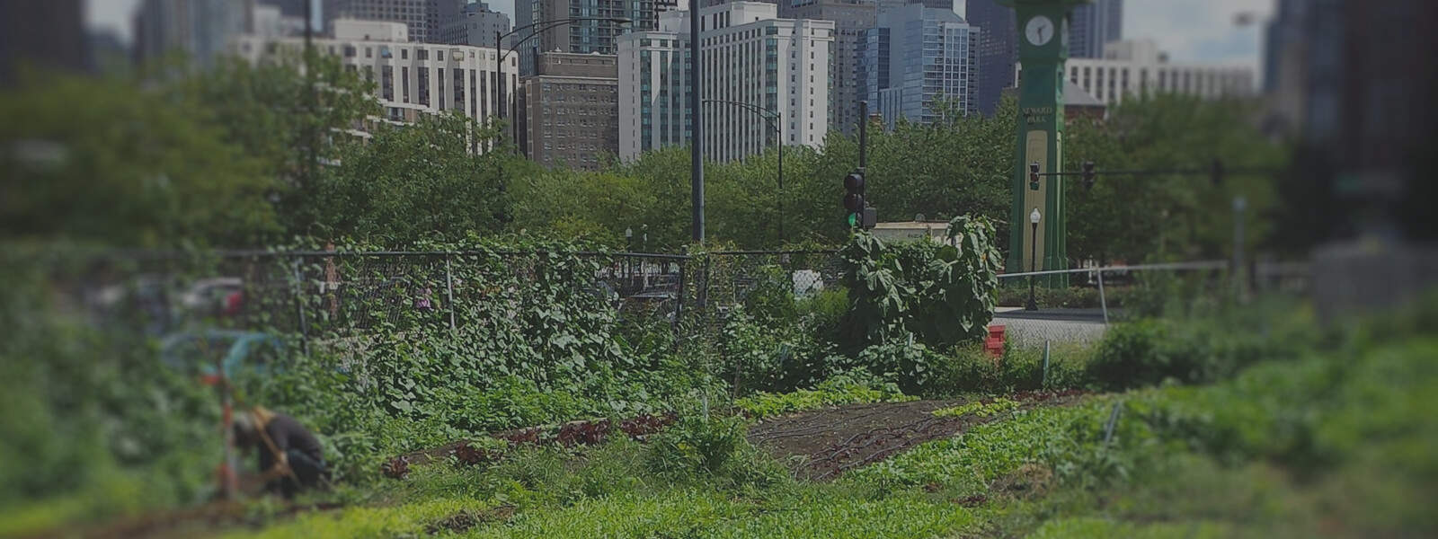 Using Microbes and Plants for Urban Remediation in Chicago: An Interview with Nance Klehm